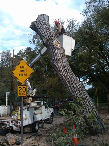Texas Tree Removal